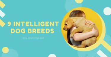 9 Intelligent Dog Breeds