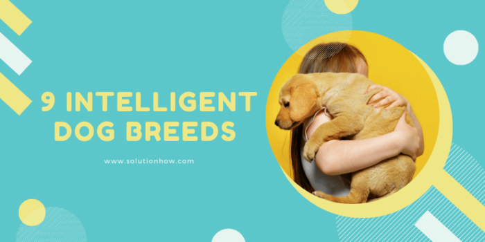 9 Intelligent Dog Breeds