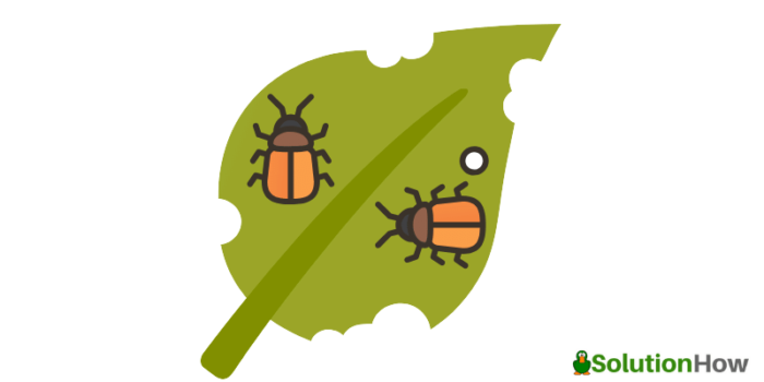 Advantages of Hiring Pest Control in Townsville, QLD