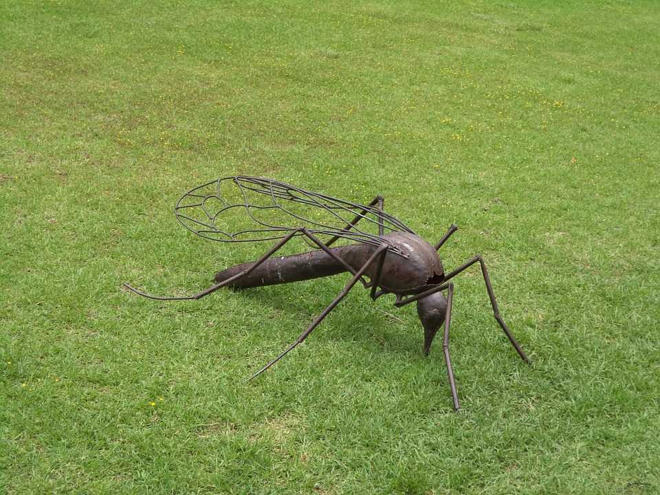 keep your lawn mosquito-free