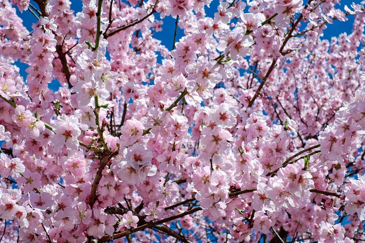 Spring Tree Care and Preparation