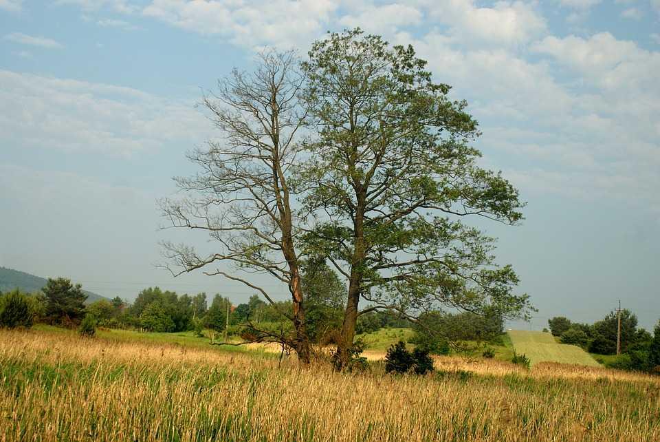 Tree Stress Signs