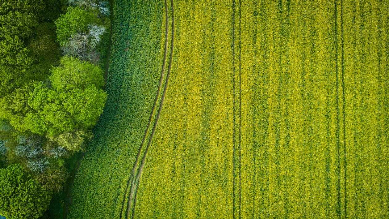 Reasons to Use Agriculture Drone Software for Farming